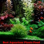 The Best Aquarium Plants Food in 2020