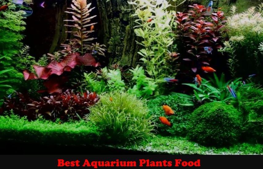 Best Aquarium Plants Food